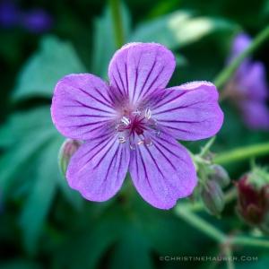 Christine-teton-flower
