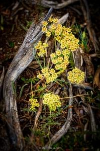 Teton-flowers-wood