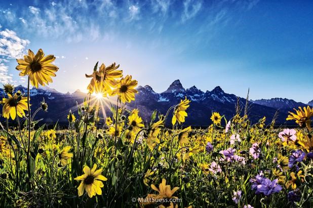 2016 Grand Teton National Park Spring Photography Workshop