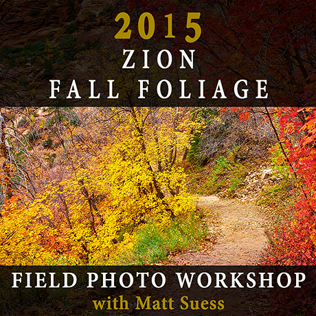 2015-Zion-Fall-Square-460